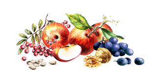 Free Autumn Harvest And Leaves. Watercolor Illustration Royalty Free Stock Image - 98883966