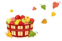 Autumn harvest with apples in basket. Autumn harvest with wicker basket filled with tasty apples. Isolated over white background. Vector file saved as EPS AI8 is Stock Photos