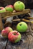 Autumn harvest apples Royalty Free Stock Photos
