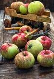 Autumn harvest apples Stock Photos