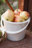 Autumn harvest of apples Royalty Free Stock Photos