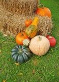 Autumn harvest arrangement Royalty Free Stock Photos