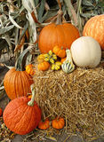 Autumn harvest arrangement Stock Photos