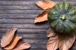 Autumn harvest banner template. Dry leaf and squash ornament on wooden table. Green pumpkin and yellow leaves on wooden background. Autumn harvest banner Stock Photos