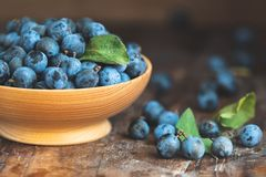 Autumn harvest blue sloe berries on a wooden table background. D royalty free stock photography