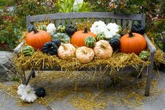 Autumn harvest bounty Royalty Free Stock Photography