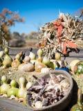 Autumn Harvest Bounty in Oktober royalty-vrije stock afbeeldingen