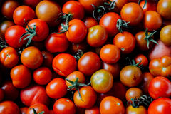 Autumn harvest. Of cherry tomatoes Stock Photography