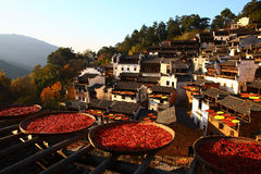 Autumn harvest in chinese village Royalty Free Stock Photo