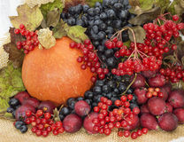 Autumn harvest close up Royalty Free Stock Photos