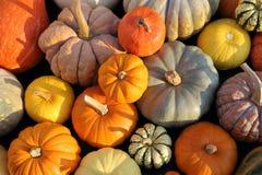 Squash and pumpkins. stock image