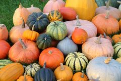Squash and pumpkins. Royalty Free Stock Photography