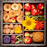 Autumn harvest. Composition in wooden box Royalty Free Stock Image