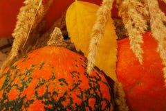 Autumn Harvest Día de la acción de gracias Fondo con las calabazas, oídos en el contexto anaranjado Imagenes de archivo