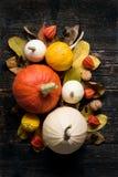 Autumn Harvest en Vakantie stilleven De gelukkige Achtergrond van de Dankzegging Selectie van diverse pompoenen op donkere houten stock foto