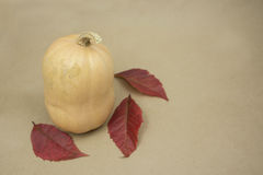 Autumn harvest. In the fall enjoy the fruits of nature Stock Photography