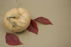 Autumn harvest. In the fall enjoy the fruits of nature Royalty Free Stock Image