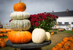 Autumn Harvest. Fancy Pumpkins - orange, white, and green Royalty Free Stock Images