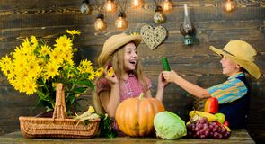 Autumn harvest festival. Children play vegetables pumpkin. Kids girl boy wear cowboy farmer style hat celebrate harvest. Festival. Celebrate fall traditions royalty free stock image