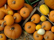Autumn - harvest festival - Halloween - Thanks Giving: a colourful arrangement of pumpkin, marrow, gourdes and others royalty free stock photo