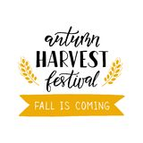 Autumn Harvest Festival - texto exhausto de la mano con trigo stock de ilustración