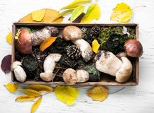 Box with forest mushrooms Royalty Free Stock Photography
