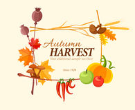 Autumn harvest frame for thanksgiving day Royalty Free Stock Photo