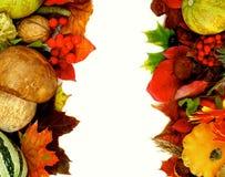 Autumn Harvest Frames Royalty Free Stock Photography