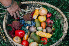 Autumn harvest fruits and vegetables. In the wickerwork basket Royalty Free Stock Photos