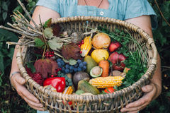 Autumn harvest fruits and vegetables. In the wickerwork basket on the hands of women Stock Photos