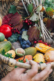 Autumn harvest fruits and vegetables. In the wickerwork basket on the hands of women Royalty Free Stock Photography