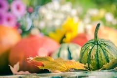 Autumn harvest garden pumpkin fruits colorful flowers plants Stock Image