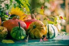 Autumn harvest garden pumpkin fruits colorful flowers plants Royalty Free Stock Photos