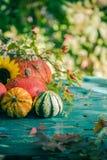Autumn harvest garden pumpkin fruits colorful flowers plants Stock Images