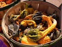 Autumn Harvest - gekräuselter Kürbis lizenzfreie stockbilder