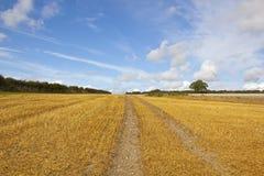 Autumn harvest Stock Photography