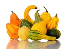 Autumn harvest gourds Stock Photo