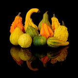 Autumn harvest gourds Stock Images