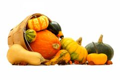 Autumn harvest. Group of autumn squash and pumpkins spilling from a harvest pail stock photo