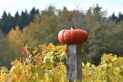 Autumn Harvest Heirloom Pumpkin em um cargo da cerca, Washington State, EUA imagem de stock royalty free