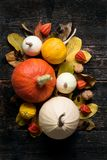Autumn Harvest and Holiday still life. Happy Thanksgiving Background. Selection of various pumpkins on dark wooden background. Stock Photo