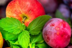 Autumn harvest. Macro shot of a freshly picked red ripe apple next to bright green peppermint leaves and dark pink plums Royalty Free Stock Photos