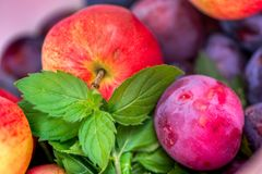 Autumn harvest. Macro shot of a freshly picked red ripe apple next to bright green peppermint leaves and dark pink plums Stock Images