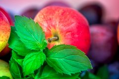 Autumn harvest. Macro shot of a freshly picked red ripe apple next to bright green peppermint leaves and dark pink plums Royalty Free Stock Images