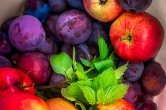 Autumn harvest. Macro shot of a freshly picked red ripe apple next to bright green peppermint leaves and dark pink plums Stock Photos