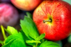 Autumn harvest. Macro shot of a freshly picked red ripe apple next to bright green peppermint leaves and dark pink plums Stock Photo