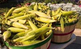 Autumn Harvest - Maiskörner Lizenzfreies Stockbild