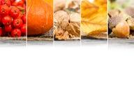 Autumn Harvest Mix Imagenes de archivo