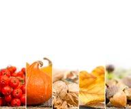 Autumn Harvest Mix Imágenes de archivo libres de regalías