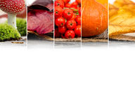 Autumn Harvest Mix Stock Photos